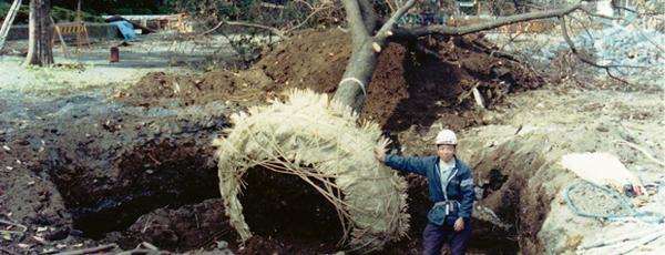 他社との共同で大木の移植